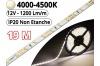 Ruban Led Pro Blanc Naturel 4500K - 19 mètres-IP20